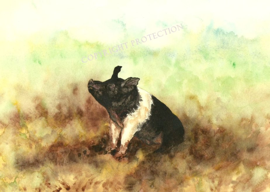 Happy as a Pig in Mud - Contentment can be found in spite of our circumstances. Realistic watercolor shows a pig in the mud, smiling