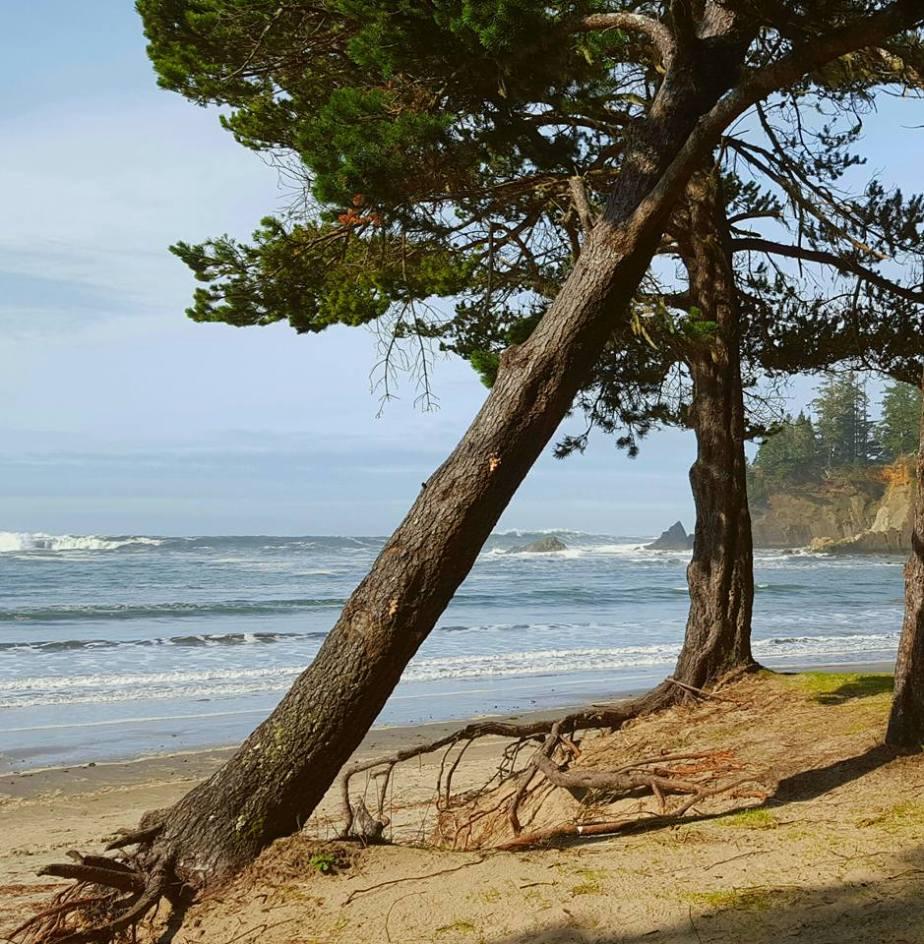 uprooted tree - Debbie Richardson